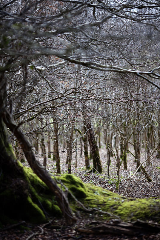 nature photographer, Wicklow, forest, trees
